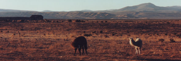 Steppe mit Lamas