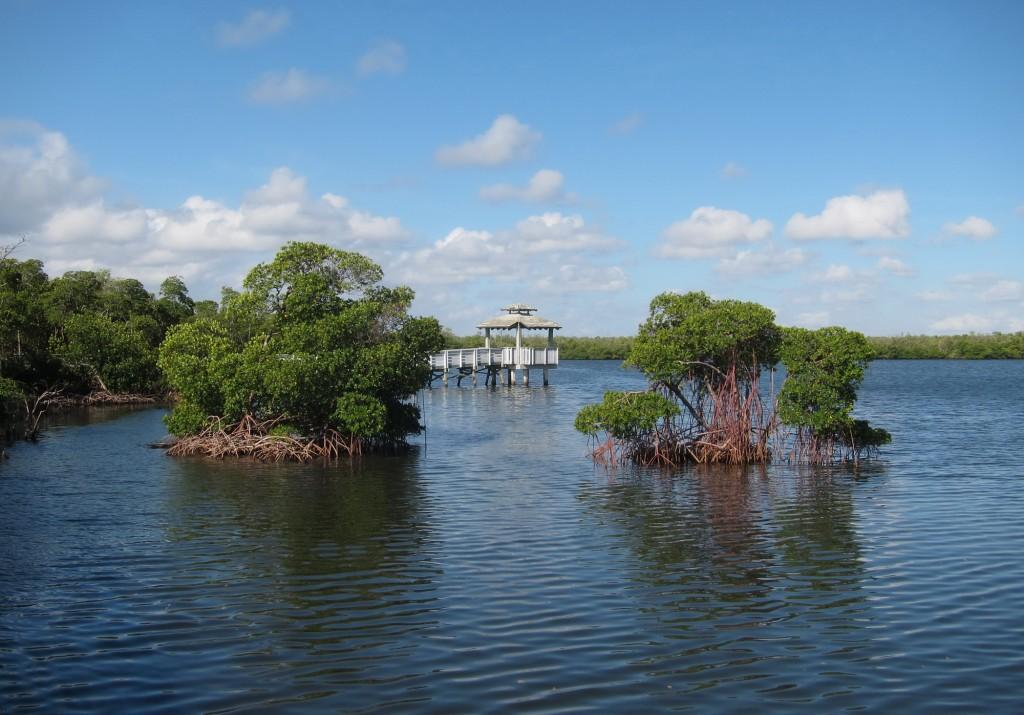 Florida Mangroven