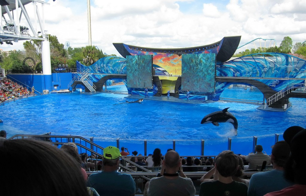 Florida Seaworld Orka