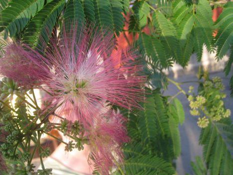 Eine tolle Blüte