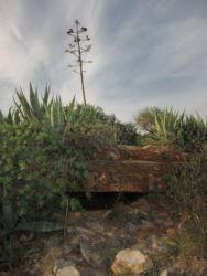 Die Natur holt sich langsam alles zurück: Ausguck am unteren Bunker