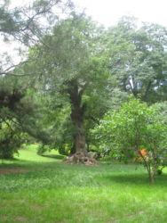 Fragrant Hills - ein schöner, weitläufiger Park